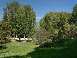 Aspen real estate 121816 140890 Tbd Smuggler Street 4 190H